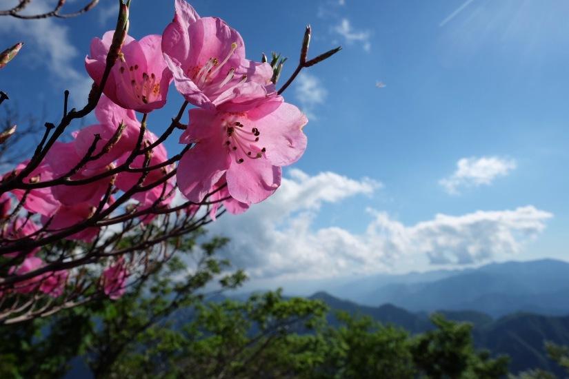 Mt. Odaigahara (大台ケ原山)1695m